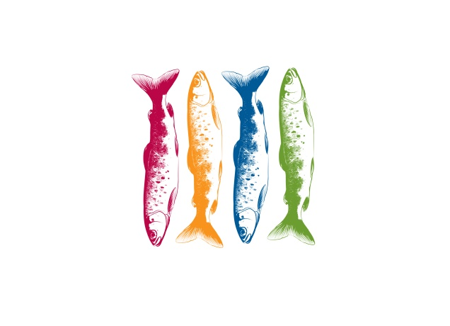 Design Colorfull Fishing